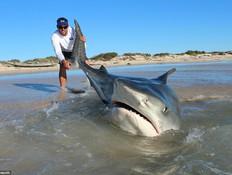 ציידי כרישים (צילום: ג'וש בטרוורת')