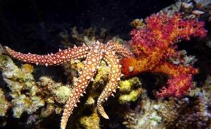 שמורת האלמוגים באילת (צילום: תום שלזינגר, זווית)