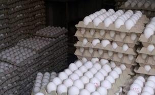 כך נתפסו הברחות ביצים