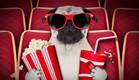 כלב בקולנוע (צילום: shutterstock ,מעריב לנוער)