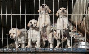 אלו התירוצים של נוטשי הכלבים (צילום: יואב בן-דב)