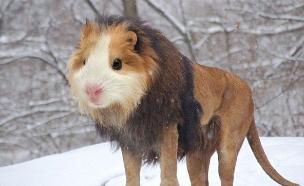חיות מעורבבות (צילום: reddit.com ,מעריב לנוער)