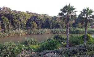 פארק ונחל חדרה (צילום: Olesya13, Wikipedia CC BY-SA 3.0)
