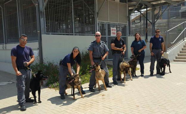צפו: כלבי המשטרה בהכשרה (צילום: דוברות המשטרה)