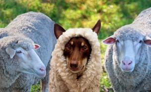 חיות שהן ממש לא כלבים (צילום: אימג'בנק/GettyImages ,מעריב לנוער)