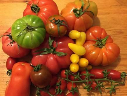 עגבניות בשוק האיכרים (צילום: גלעד ותמר צדיקפור ,אוכל טוב)