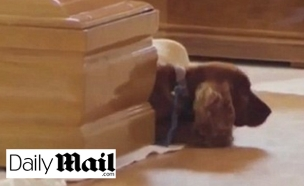 הכלב פלאש ליד ארון בעליו (צילום: דיילי מייל)