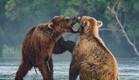 קמצ'טקה: דובים והרי געש | צילום : יואל שליין