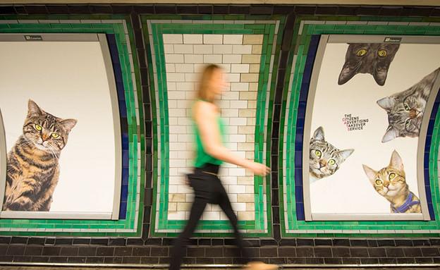 חתולים ברכבת של קלפהאם (צילום: קיקסטארטר ,מעריב לנוער)