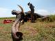 110,000 פילים בעשור האחרון (צילום: רויטרס)