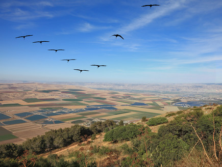 נוף ישראלי (צילום: kavram, Shutterstock)