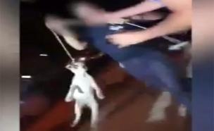 תיעוד ההתעללות בכלב (צילום: דוברות המשטרה)