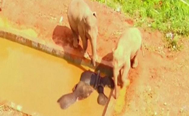 צפו בחילוץ המרגש של הפילים הלכודים