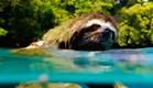 """עצלן שוחה בטריילר של """"כדור הארץ 2"""" (צילום: יוטיוב  ,צילום מסך)"""