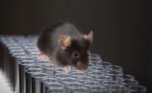 עכבר מעבדה (צילום: shutterstock)