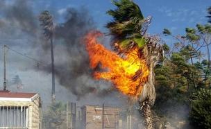 שריפה בעתלית (צילום: רקאד מוחסין)