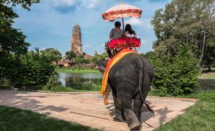 רכיבה על פיל (צילום: Natalee Zana, Shutterstock)