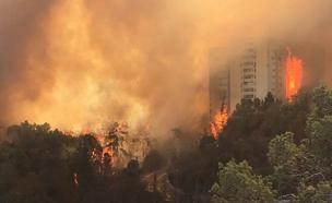 שריפה, חיפה