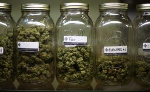 סוגים שונים של מריחואנה רפואית בחנות קואופרטיבית בלוס אנג'לס (צילום: getty images ,getty images)