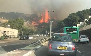 השריפה בחיפה (צילום: שרון באום)