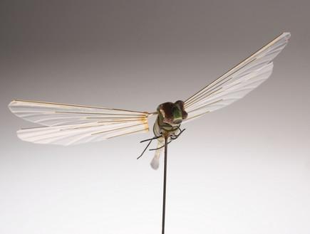 שפירית מרגלת (צילום: flickr/ciagov)