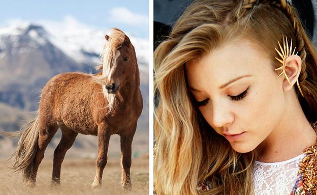 סוסים וסלבס (צילום: צילום מסך ,מעריב לנוער)