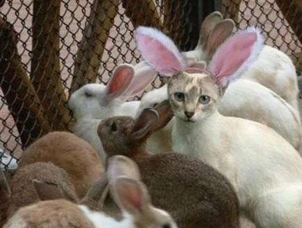 חתולה בין שפנים (צילום: צילום מסך ,מעריב לנוער)
