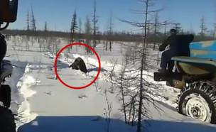 דוב נדרס (צילום: יוטיוב)