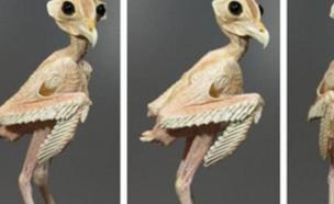 ינשוף ללא נוצות (צילום: טוויטר)