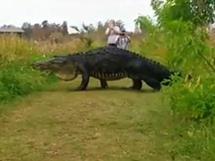 זוחל עצום באורך 4 מטרים תועד על ידי המבקרים (צילום: CNN)