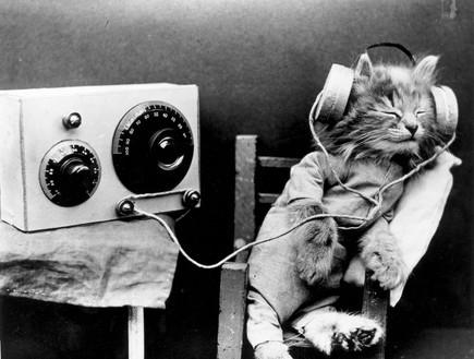 חתול מאזין למוזיקה (צילום: getty images ,getty images)
