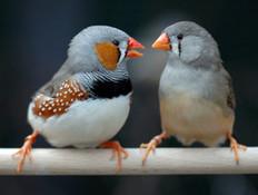 חיות עושות דברים מוזרים (צילום: Max Planck Institute for Ornithology)