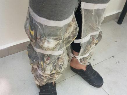 נחשו: כמה ציפורים נכנסות במכנס אחד? (צילום: רשות שדות התעופה)