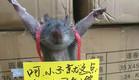 עכברוש נענש (צילום: CEN)