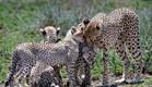 הטבע המדהים של טנזניה | צילום : עידו פאלח