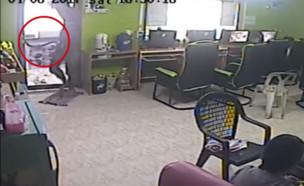 נחש באינטרנט קפה (צילום: יוטיוב)