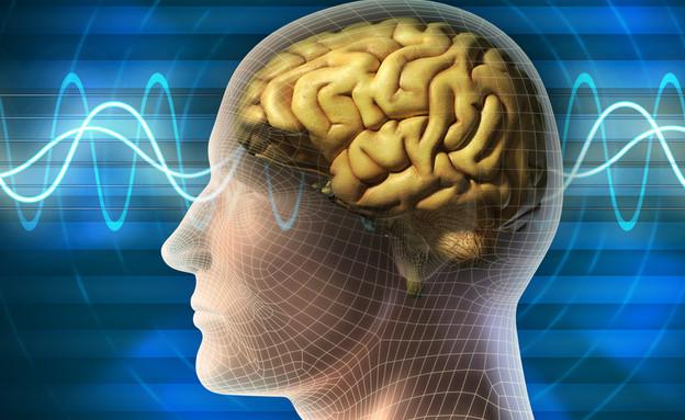 גלי מוח (צילום: ShutterStock ,ShutterStock)