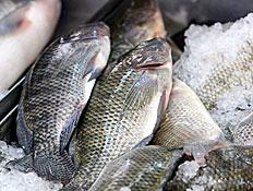 דגים בשוק
