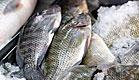 דגים בשוק (צילום: עודד קרני)