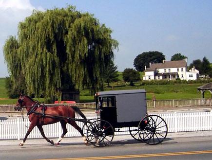 מרכבה עם סוס בנוף הירוק (צילום: stock_xchng)