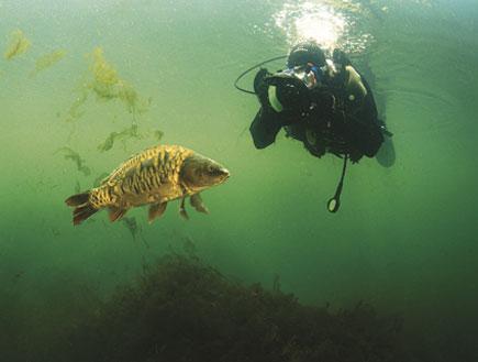 צוללן מצלם דג