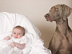 כלב אפור יושב ליד תינוק בעריסה לבנה (צילום: istockphoto)