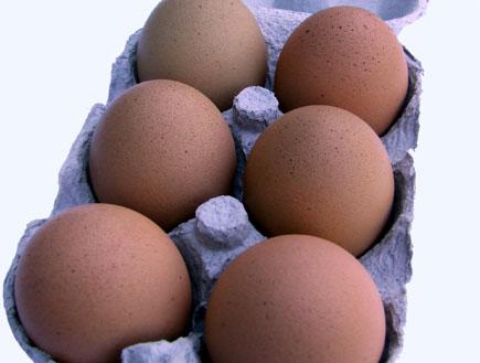 תרנגול קלאסי (צילום: stock_xchng)