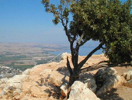 עץ על קצה הר ארבל (צילום: איל שפירא)