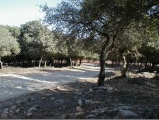 טיולים לצפון: שביל ובצידיו עצים בהר הכרמל (צילום: איל שפירא)