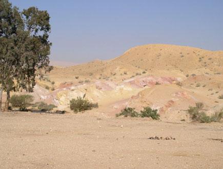 טיולים בדרום: עץ בודד במכתש הגדול (צילום: איל שפירא)
