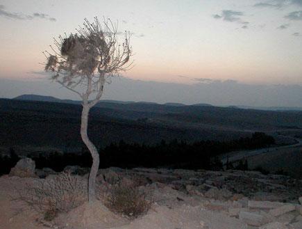 טיולים בדרום: הר עמרם (צילום: איל שפירא)