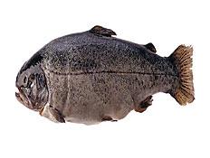 דג (צילום: jupiter images)