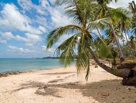אי גן עדן (צילום: ShutterStock)