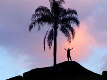 אדם ליד עץ דקל מרחוק, שמיים סגולים (צילום: אור גץ)